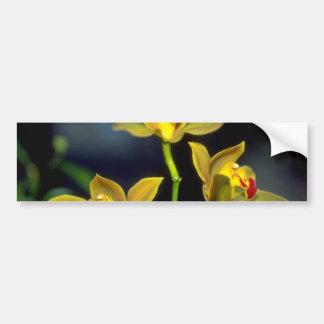 yellow Dendobium flowers Bumper Sticker