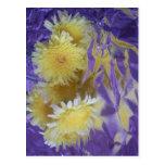 Yellow Desert Wild Flowers Postcard