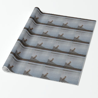Yellow dog on dock wrapping paper