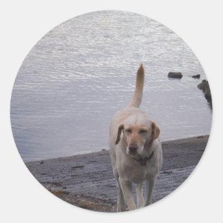 Yellow Dog on dock Yellow Labrador retriever Classic Round Sticker