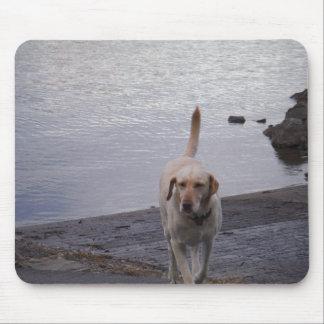 Yellow Dog on dock Yellow Labrador retriever Mousepad