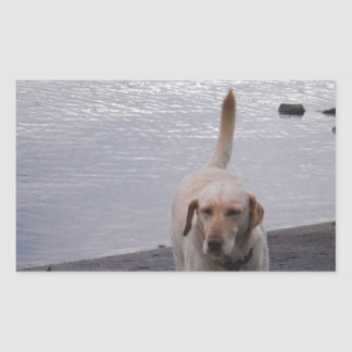 Yellow Dog on dock Yellow Labrador retriever Rectangular Sticker