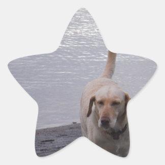 Yellow Dog on dock Yellow Labrador retriever Star Sticker
