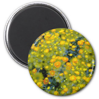 yellow Double exposure of chrysanthemums flowers Magnet