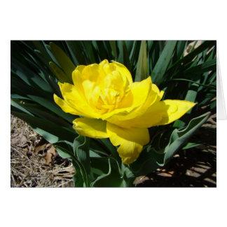 Yellow Double Tulip Card