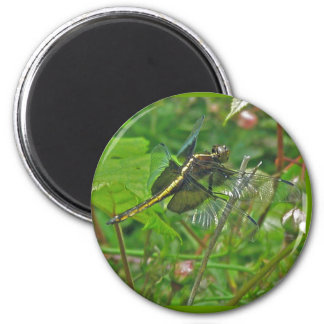 Yellow Dragonfly Magnet