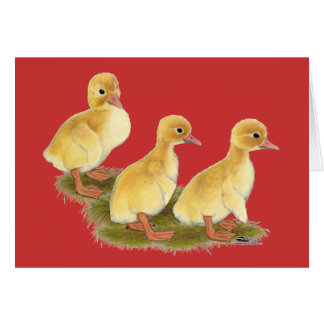 Yellow Ducklings Card