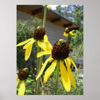 yellow echinacea black eyes susan flowers art poster