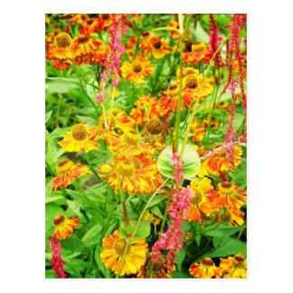 Yellow Echinacea Flowers Postcard