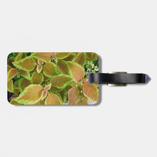 Yellow edged coleus plant bag tag