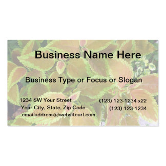 Yellow edged coleus plant business card
