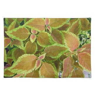 Yellow edged coleus plant cloth placemat