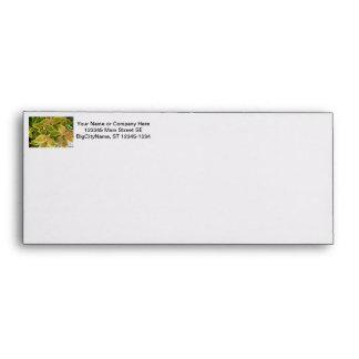 Yellow edged coleus plant envelopes