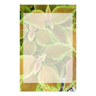Yellow edged coleus plant stationery