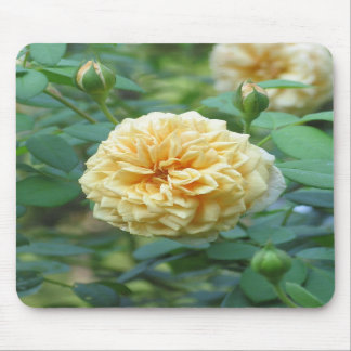 Yellow English Rose Mouse Pads