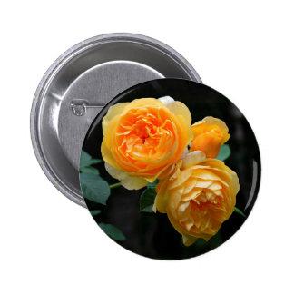 Yellow English Roses Pinback Button