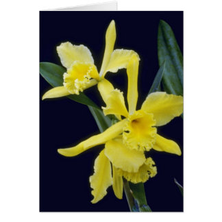 yellow Ermine Orange Glo (Brassocattleya) flowers Greeting Cards