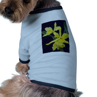 yellow Ermine Orange Glo (Brassocattleya) flowers Doggie Shirt