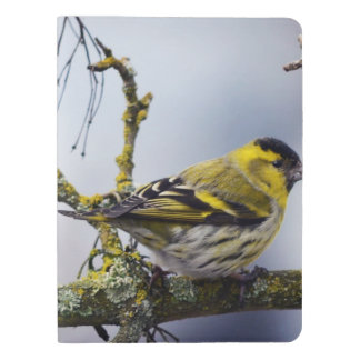 yellow Eurasian siskin on a bare branch in winter Extra Large Moleskine Notebook