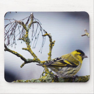 yellow Eurasian siskin on a bare branch in winter Mouse Pad