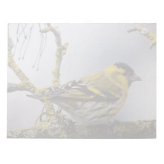 yellow Eurasian siskin on a bare branch in winter Notepad
