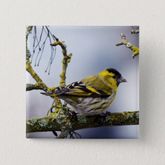 yellow Eurasian siskin on a bare branch in winter Pinback Button