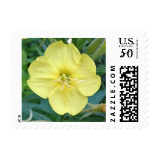 Yellow Evening Primrose Flower Postage