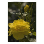 Yellow Evening Rose, Thinking of You Greeting Card