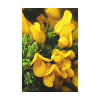 Yellow Evergreen Flowers Canvas Print