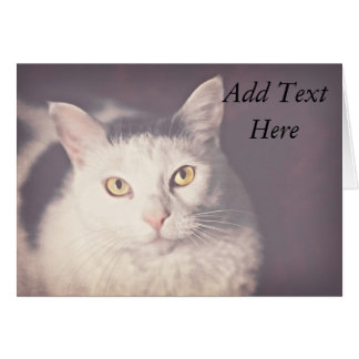 Yellow-eyed Cat Stationery Note Card