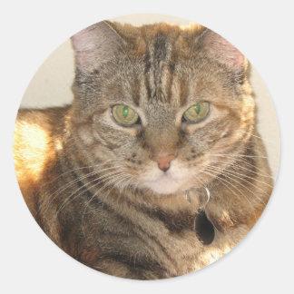 yellow eyed cat classic round sticker