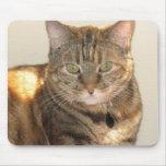 yellow eyed cat mouse mat