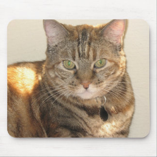 yellow eyed cat mouse pad