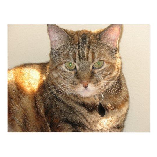 yellow eyed cat postcard