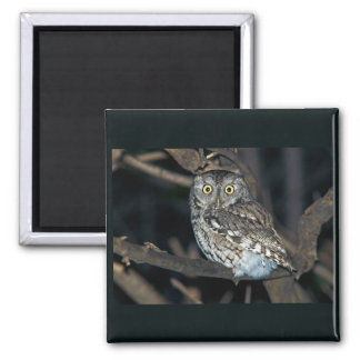 Yellow Eyed Eastern Screech Owl at Midnight 2 Inch Square Magnet