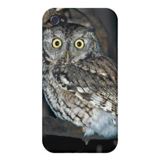 Yellow Eyed Eastern Screech Owl at Midnight Covers For iPhone 4