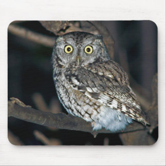 Yellow Eyed Eastern Screech Owl at Midnight Mouse Pad