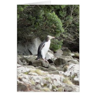 Yellow Eyed Penguin Card