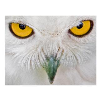 yellow eyes owl postcard