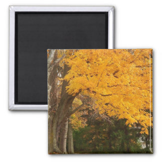 Yellow Fall magnet