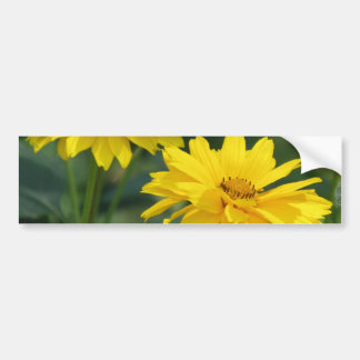 Yellow False Sunflowers Bumper Stickers