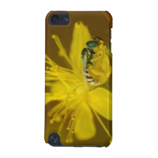 Yellow Female Bee Collecting Pollen iPod Touch (5th Generation) Case
