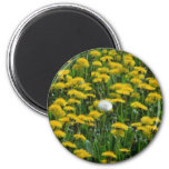 Yellow Field of dandelions in the Netherlands flow 2 Inch Round Magnet