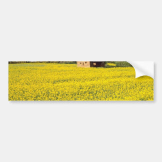 yellow Field of yellow rapeseed in North Yorkshire Bumper Sticker