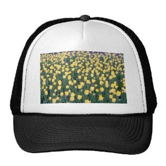 yellow Field of yellow tulips flowers Hat