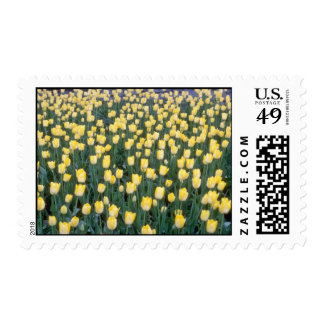 yellow Field of yellow tulips flowers Stamps
