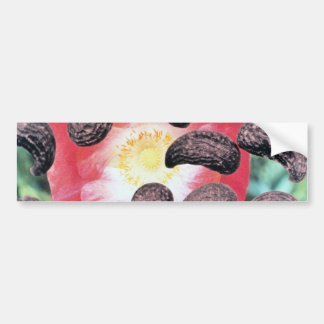 Yellow Field poppy seeds (Papaver rhoeas) flowers Bumper Sticker