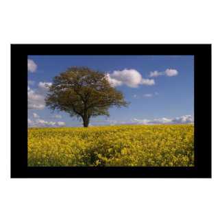 Yellow Fields Poster