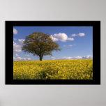 Yellow Fields Print