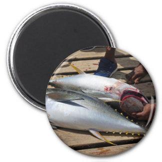yellow fins tuna magnet